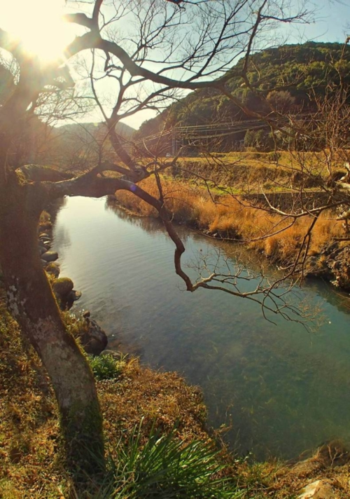 美しい自然を守るということ。